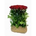 50 Shades Of Roses FV-009